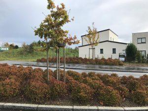 cybel extension agrandissement maison la chapelle des fougeretz 35